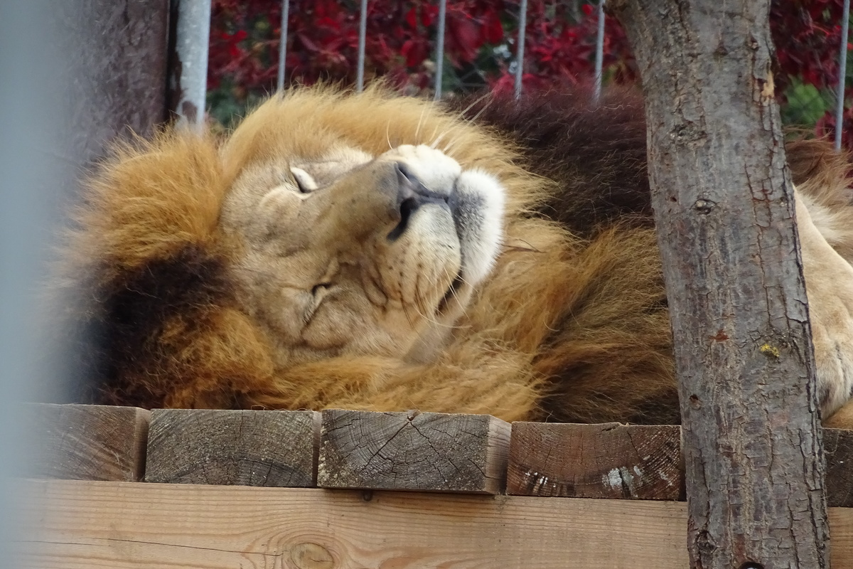 56c0efc2a39 Táborská zoo určitě není pro zvířata vězením