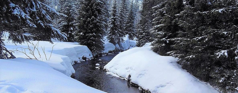 FOTO DNE 4.1.  Ilona Kolářová - Modravský potok v zimě dd7472a852