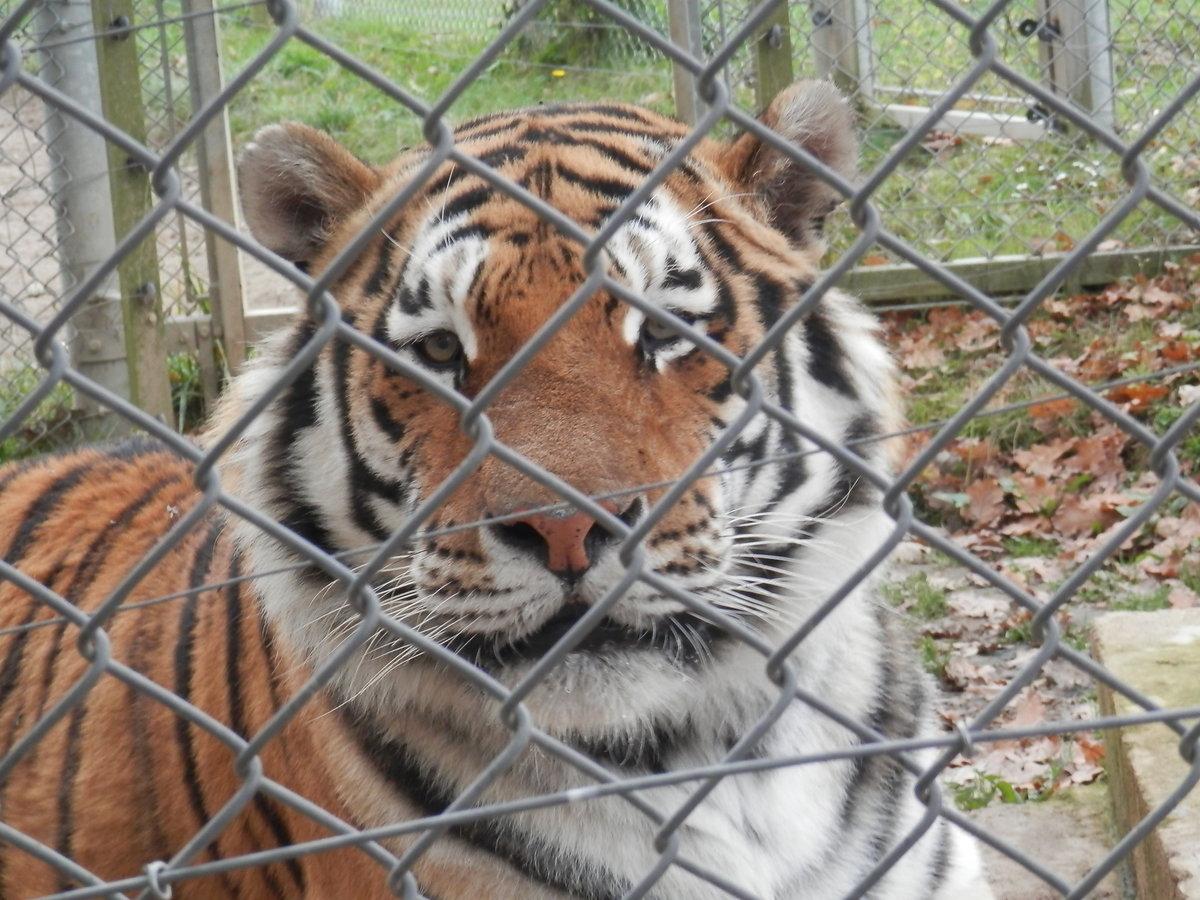 Ahoj, Rocky! aneb Za adoptovanými i ostatními zvířaty v táborské zoo