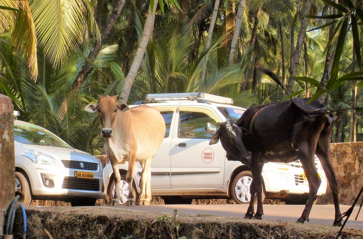 Nejlepší seznamka v Goa