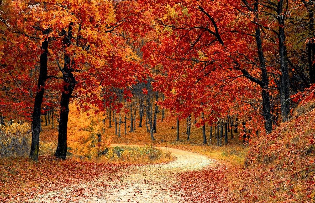 Výsledek obrázku pro na podzim