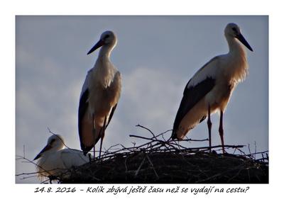 Velcí kluci s velkými ptáky