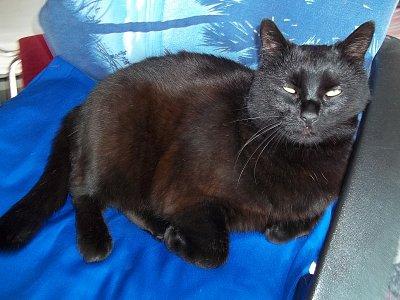 mokré n divoká černá kočička