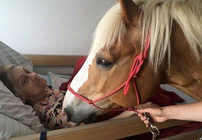Koně dojali klienty domova pro seniory přímo u jejich lůžek