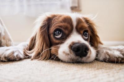Psi poznají naše nemoci. Je to vědecky potvrzeno!  76732f1b17