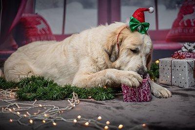 Vánoce v psích a kočičích miskách